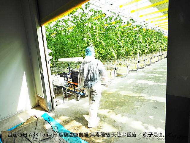 番茄方舟 ARK Tomato 玻璃溫室農場 無毒種植 天使串番茄 21
