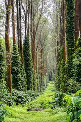 Elephant Forests, Coorg