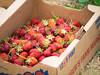box 'o berries