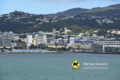Ferry Picton-Wellington