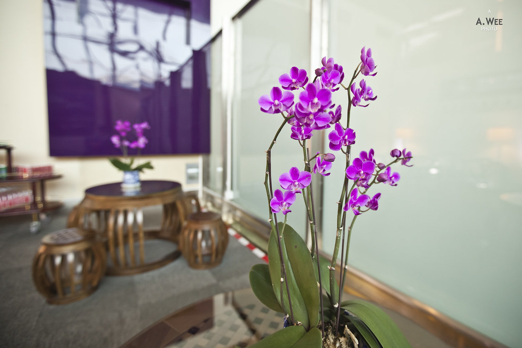 Orchids in the lounge