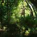 Nature's grasp. by Kyra Elizabeth