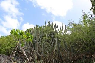 Image de Reef Bay Beach près de Cruz Bay. flora nps usvi catci deaftalent deafoutsidetalent deafoutdoortalent