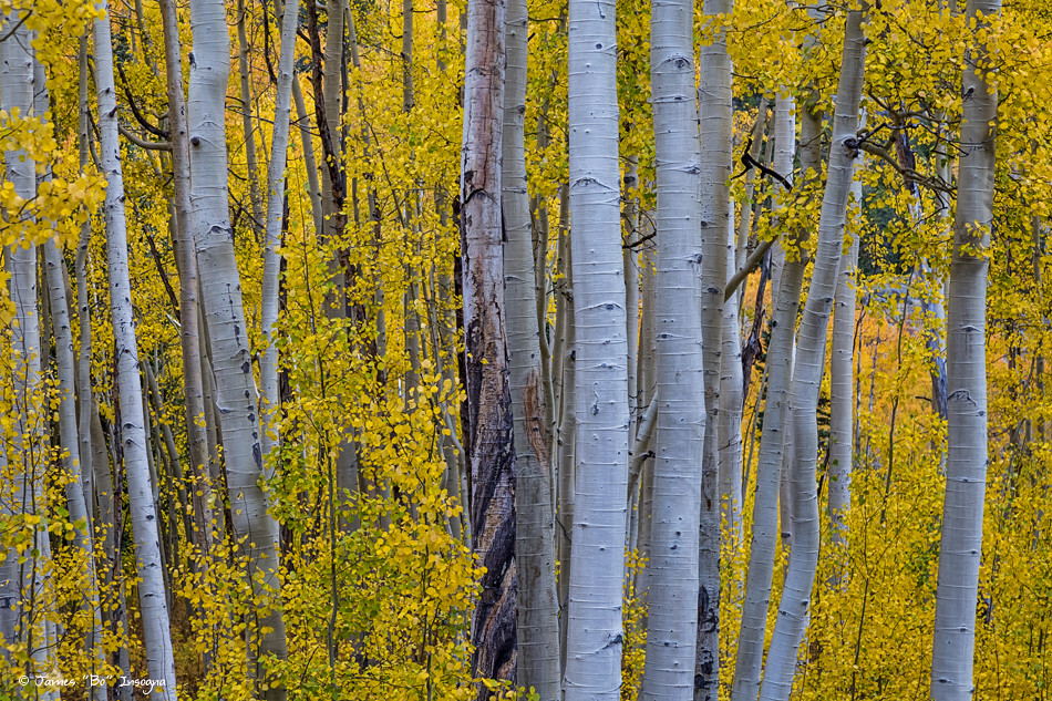 Wood Mountain Elevation : Elevation of mount shimer mt colorado usa maplogs