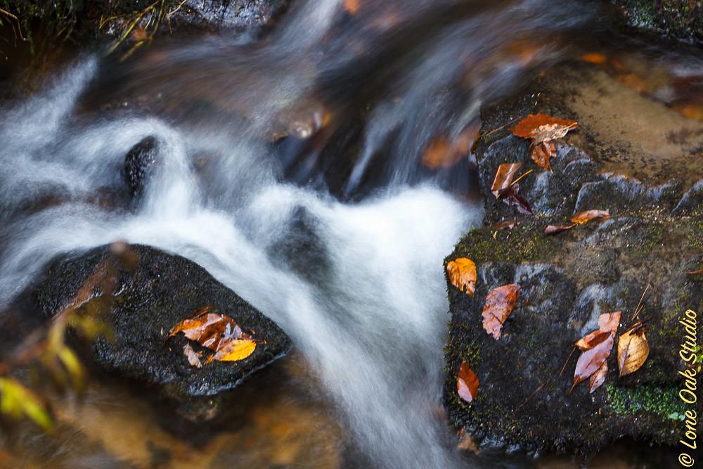 Friday Fall Foliage 2015