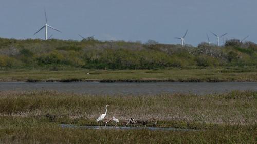 bird landscape us texas unitedstates wildlife cbc odem mikaelbehrens nuecesdeltapreserve