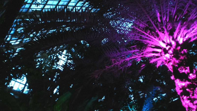 palm trees kiev