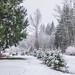 Mixed snow rain-9