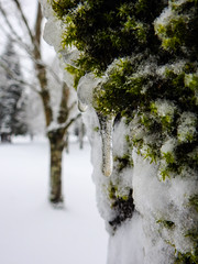 Mossy Icicle Macro 2 -  Snowpocalypse 2017_39