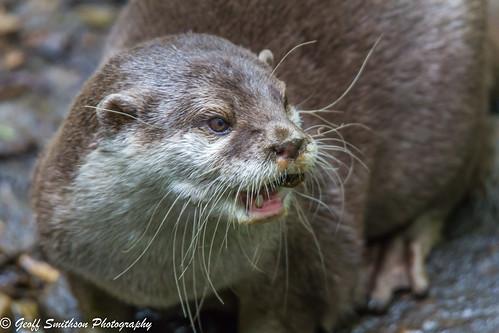 Otter Surprise