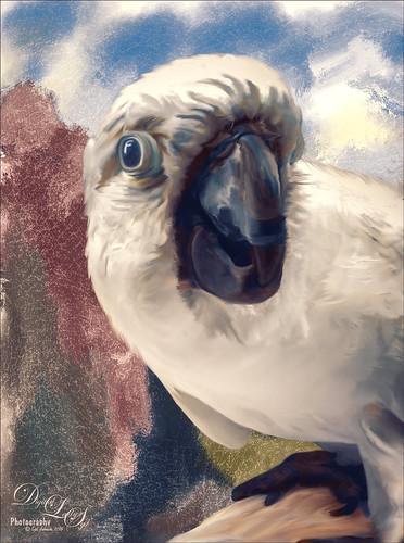 Image of a Cockatoo