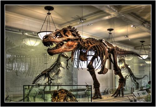 New York City USA – American Museum of Natural History – David H. Koch Dinosaur Wing – Tyrannosaurus Rex 08