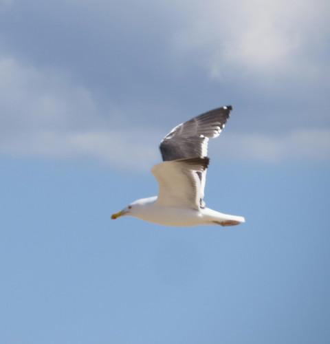 Chandeleur_flight_underwing