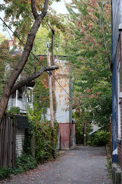 Autumn back alley