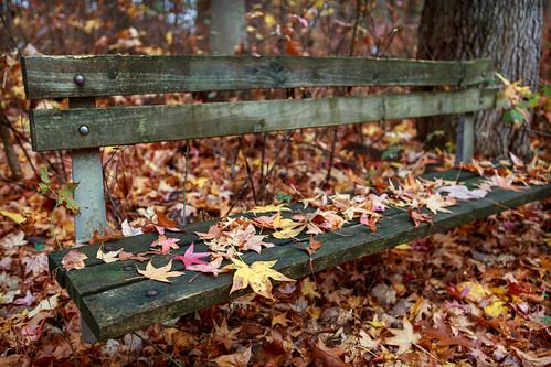 autumn fall nature leaves forest bench landscape woods nj eastbrunswick dallenbach