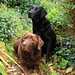 Ralph & Bella, in the jungle that it is our garden ! by Sue Nicholson