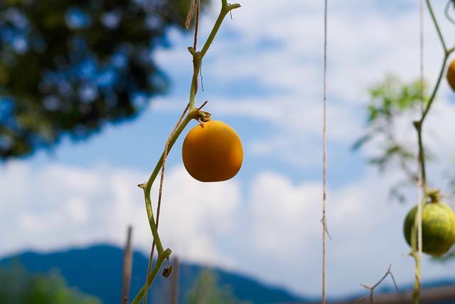 Thai-Pumpkin