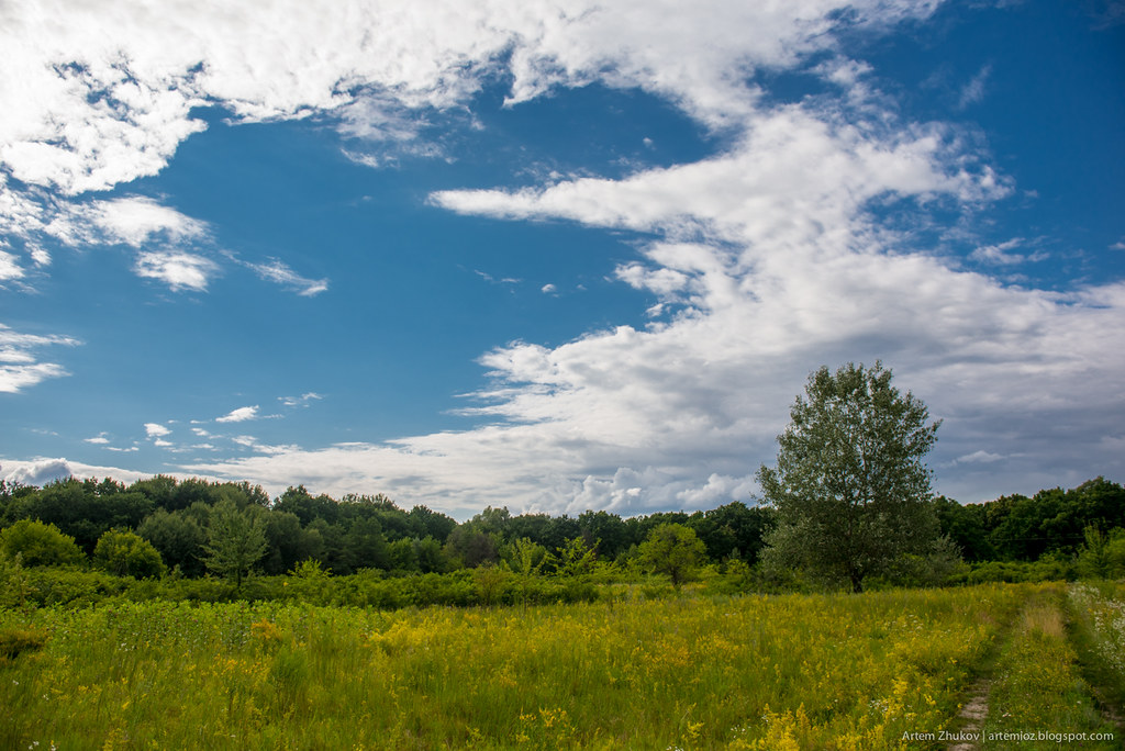 Ukrainian field and blue sky.jpg