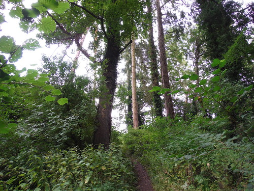 Steep Narrow Path up from Fonthill Lake