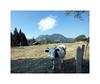 Vache au pré avec nuage by Brulama