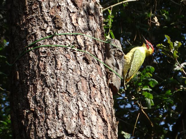 Figura en la Ruta Ornitológica del Bosque Animado