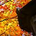 Autumn Zen Garden - Nitobe Memorial Garden by TOTORORO.RORO