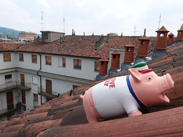 cochon sur le toit