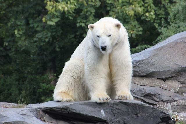 Sonntags-Besuch im Tierpark Friedrichsfelde 04.10.201590