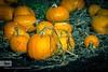 decorative gourd season by beryllium9 http://bit.ly/1Z8fZui #Halloween
