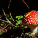 HimynameisPaolo posted a photo:Shot taken during a trip in the woods of Passo Nigra, Trentino, Italy.