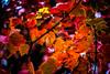 Autumn Above [10/31] by Nomis.