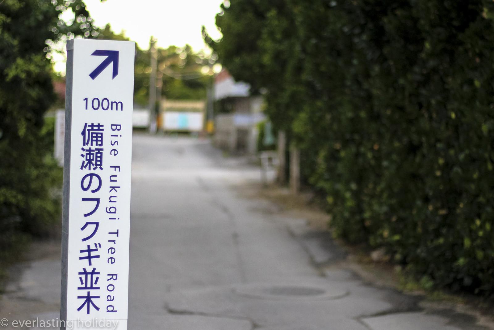 備瀬フクギ並木通り Bise Fukugi Tree Road-0001