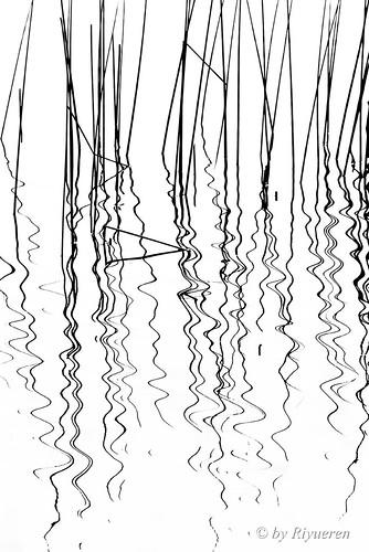 Riflessi e Forme: Segni