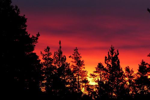 morning winter sky cloud clouds forest sunrise espoo finland geotagged december fin nuuksio uusimaa 2015 nyland noux esbo solvalla 201512 geo:lat=6029816902 geo:lon=2455592393 20151205