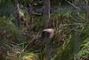 Wetlands_010217_gnangarra-106