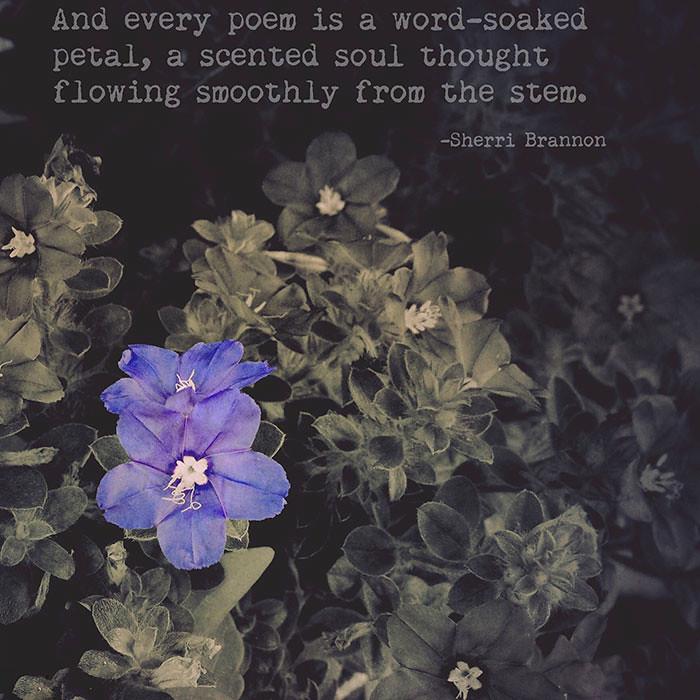 word soaked petal