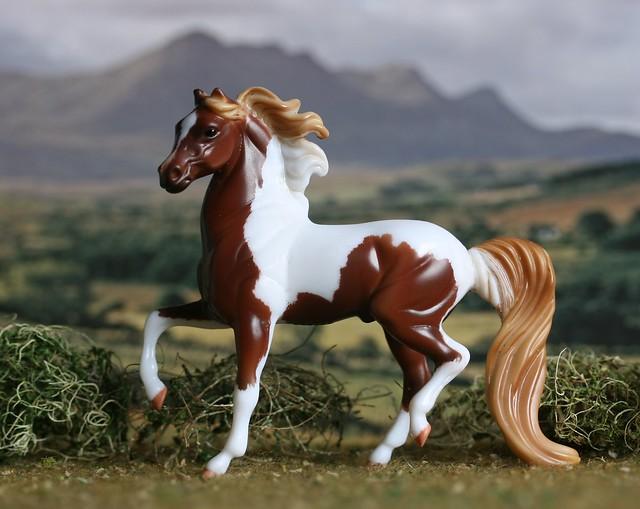 EA Fanfare - Morgan - Stallion - CM - EG