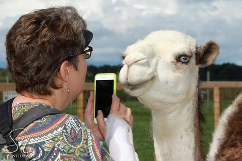 Camel Closeup FM2A8800-15