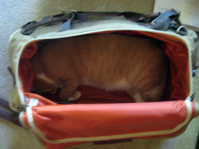 buddy in don's suitcase 2