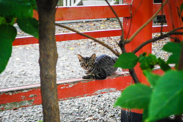 Today's Cat@2015-09-06