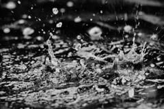 Water Drops, 2015