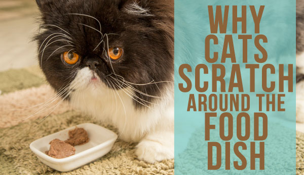 cats-scratch-around-food-dish