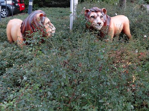 Schweigen und Trauern in Prohlis wohne der stille Tod der Löwen 0132