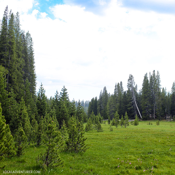 Crescent Meadow (15 Amazing Things to See in Sequoia National Park).