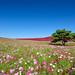 Hitachi Seasaide Park by Takuya_Igarashi