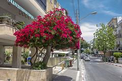 Tel Aviv 055