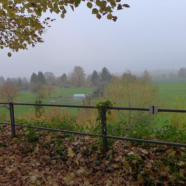der nebel kommt