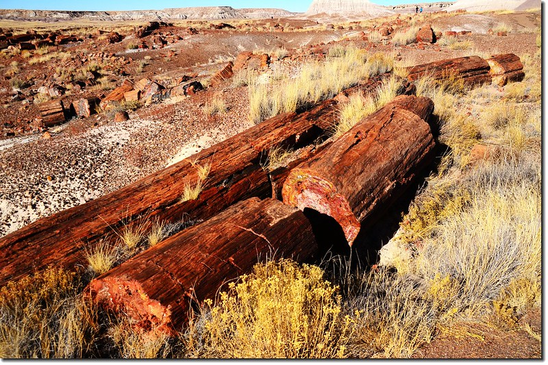Long Logs Trail, Petrified Forest National Park 3