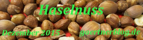 Garten-Koch-Event Dezember 2015: Haselnuss [31.12.2015]