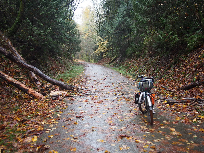 Snoqualmie Valley Trail: Downed Tree #1, Removed: On my way back, I noticed that someone had cut up the tree.  This kind of reminds me of a blocked path in an RPG that requires an event to occur (in this case, meeting a friend in Carnation) before it's cleared.